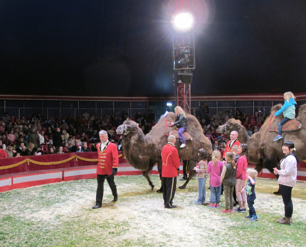 cirkus6